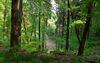 Oderlandweg, Falkenberg Kammweg