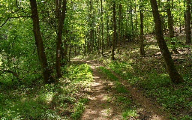 "2. Etappe ""Oderlandweg"":  Falkenberg/Mark - Wölsickendorf"