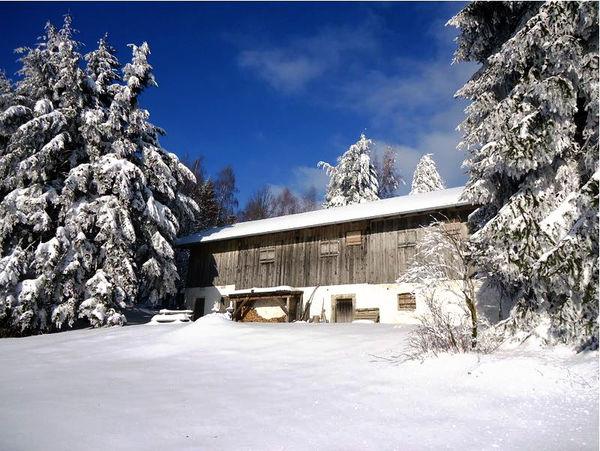 Wandern durch unberührte Winterlandschaft