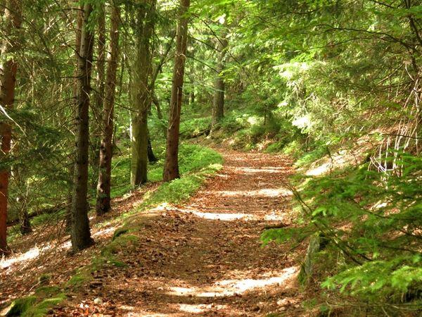 Herrlicher Waldabschnitt auf dem Zachenberger Steinbruchweg