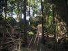 Waldlehrpfad am Pfahl mit Himmelstreppe