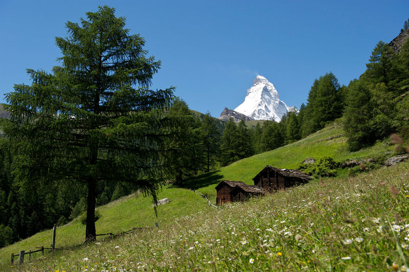 The Matterhorn behind lush green meadows.