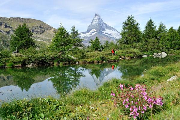 L'une des étapes sur le chemin des cinq lacs de Zermatt: le Grindjisee, avec sa flore alpine unique.