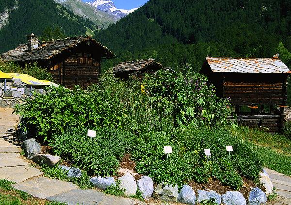 Die Bergkräuter wachsen in Rondellen. Aus pädagogischen Gründen sind einige Pflanzen beschriftet, andere aber nicht.
