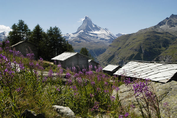 Mountain pastures, alpine flowers, romantic old houses and the Matterhorn – what more could one wish for?