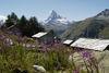 Alpwiesen, Alpenblumen, romantische Häuser und das Matterhorn - was will man in der Zermatter Bergwelt noch mehr?