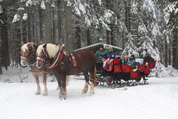 Romantische Schlittenfahrt durch den Bayerischen Wald