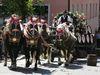 Brauereiwagen-Geschicklichkeitsfahren beim Zwieseler Grenzlandfest im ArberLand Bayerischer Wald