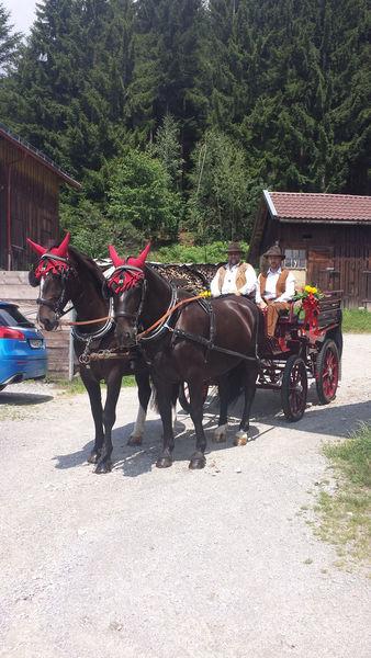 Pferdekutschen/-schlittenfahrten Michael Palmi
