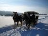 Schlittenfahrt durch die verschneite Landschaft des Bayerischen Waldes
