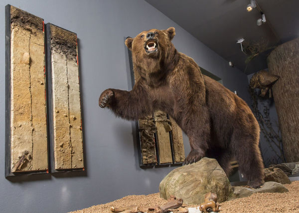 Wilde Tiere im Waldmuseum Zwiesel