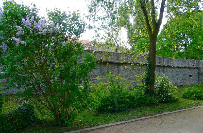 Wasserburg-Ruine